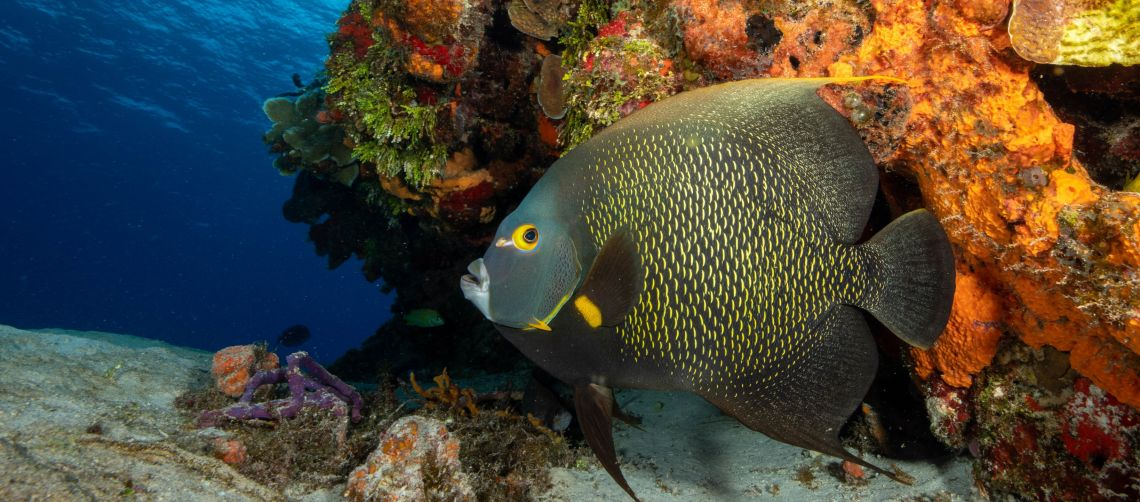 Welcome to Cozumel Dive Academy and Dive Boutique Cozumel Online